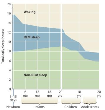 Hình 4.16. Sự thay đổi thời lượng giấc ngủ đảo mắt nhanh và giấc ngủ không đảo mắt nhanh